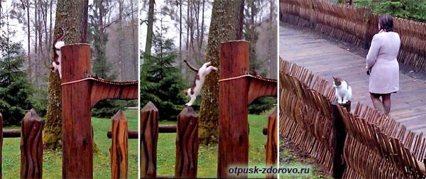 Сказочная кошка. Беловежская Пуща. Резиденция Деда Мороза, Беларусь