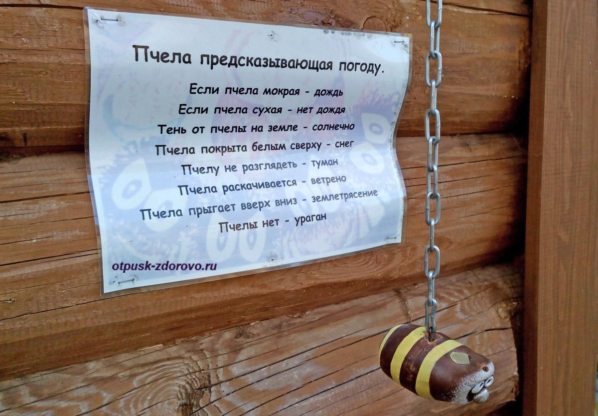 Приметы, как пчела предсказывает погоду, Дудутки, Беларусь