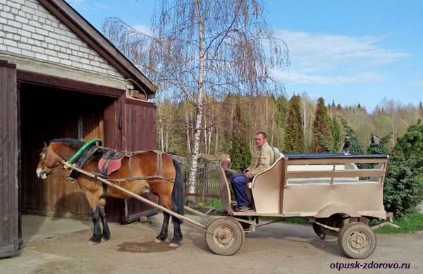 Лошадь, запряженная в повозку, Дудутки, Беларусь