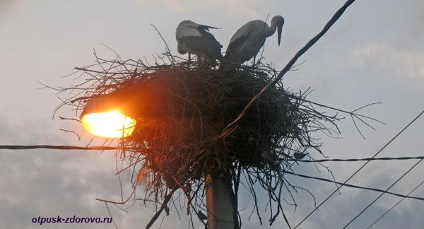 Пара аистов в гнезде на фонаре