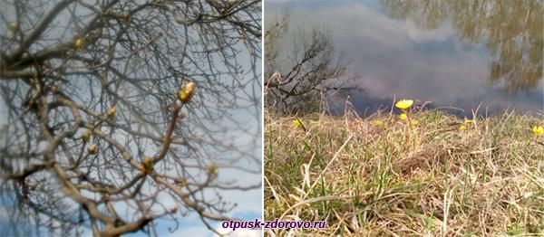Весна, первые цветы, почки на деревьях