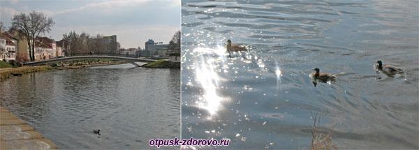 Река Свислочь, утки, Минск, достопримечательности
