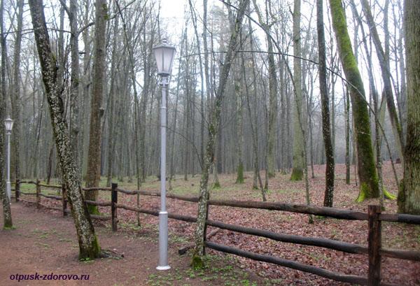 Первобытный лес и фонарь. Музей народного быта и старинных технологий в Беловежской Пуще