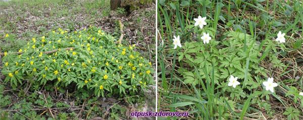 Весенние цветы. Несвижский Дворцово-Парковый комплекс, Беларусь