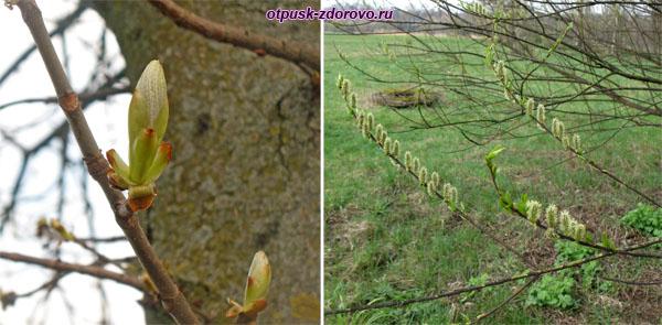 Распускаются деревья. Несвижский Дворцово-Парковый комплекс, Беларусь