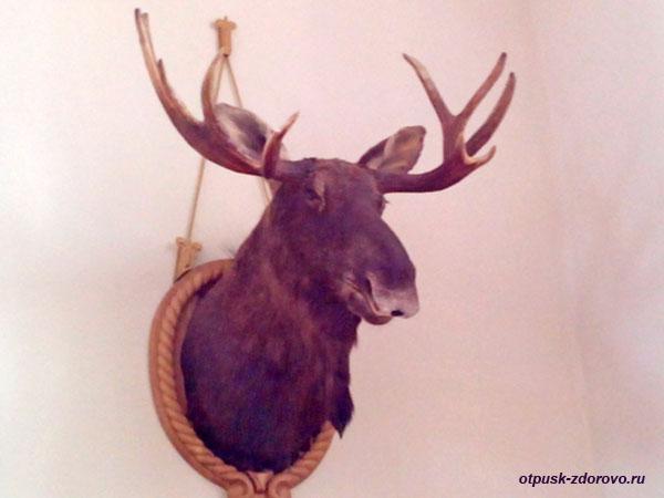 Чучело лося. Охотничий зал в Замке Радзивиллов в Несвиже, Беларусь