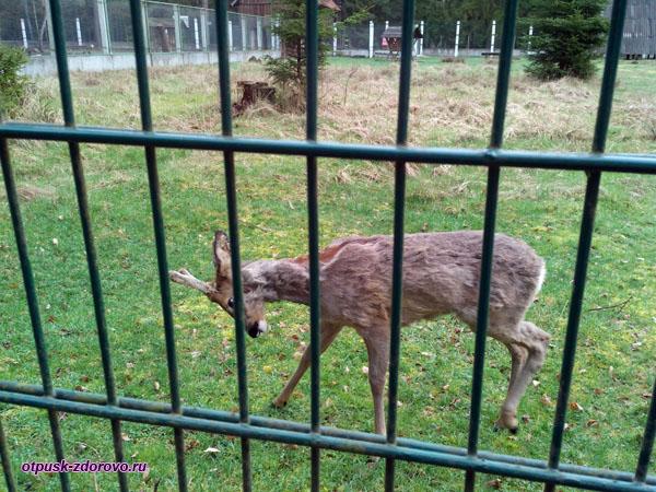 Животные Беловежской Пущи. Вольеры