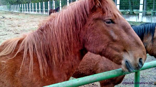 Лошадь. Животные Беловежской Пущи. Вольеры