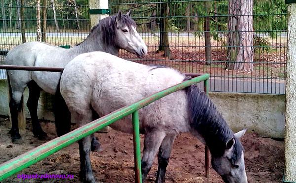 Трапановидная лошадь. Животные Беловежской Пущи. Вольеры