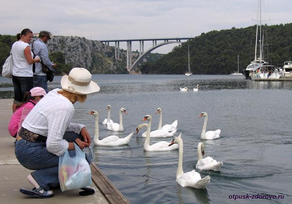 Пристань в парк водопадов Крка, кормление лебедей