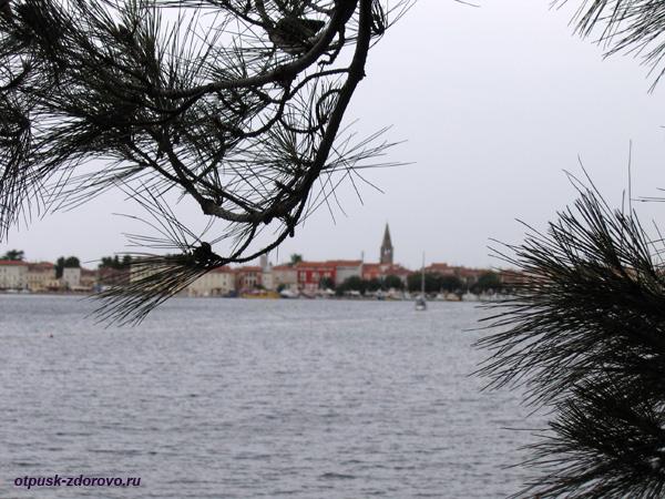 Хорватия, Пешком в Пореч из Зеленой Лагуны, хвойные