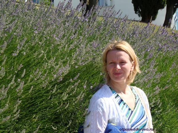 Хорватия, Пореч, Зеленая Лагуна, лаванда цветы