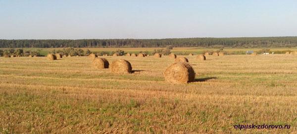 Осенние поля, стога, красивая русская природа, Калужская область