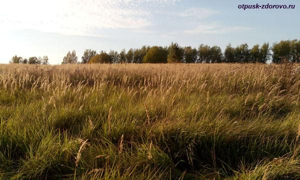 Широкий русский простор, поле возле Гремучего ручья, Калужская область