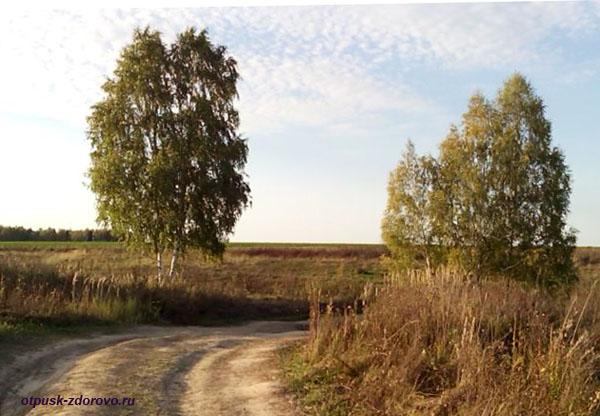 Широкий русский простор, поле, березы возле Гремучего ручья, Калужская область