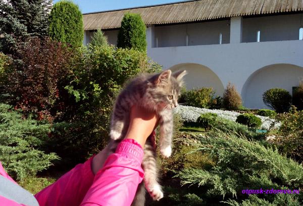 Пафнутьевский монастырь в Боровске, кошки