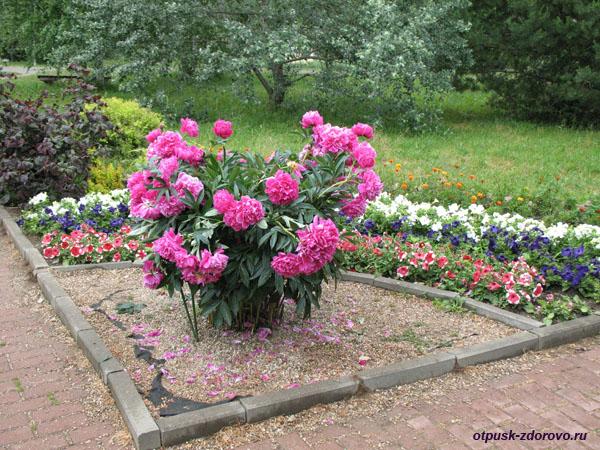 Парк Птиц в Калужской области, территория