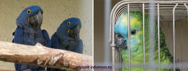 Парк Птиц в Калужской области, попугаи