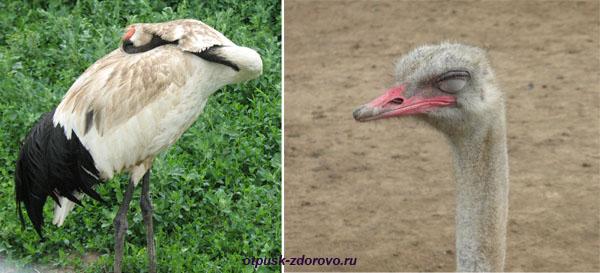 Парк Птиц в Калужской области