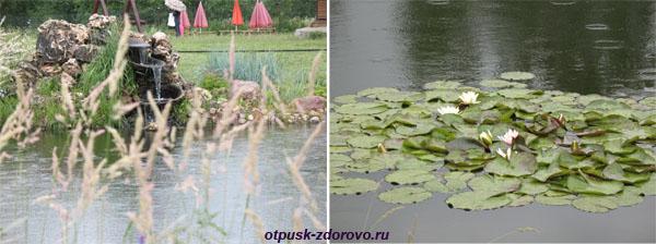 Парк Птиц в Калужской области, территория, пруд
