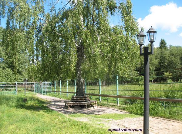 Территория лосиной фермы, Кострома