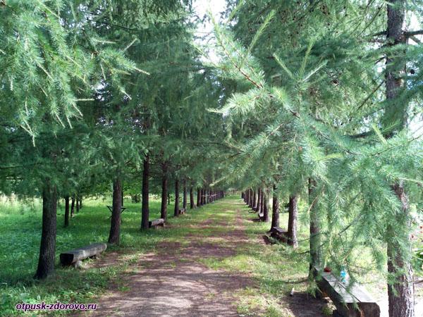Парковая зона в усадьбе Следово, Костромская область