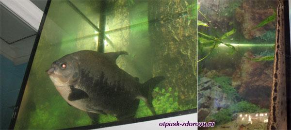 Рыба в аквариуме и хвост рептилии