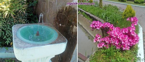 Цветы и питьевой фонтан на территории форелевого хозяйства, Адлер (Сочи)