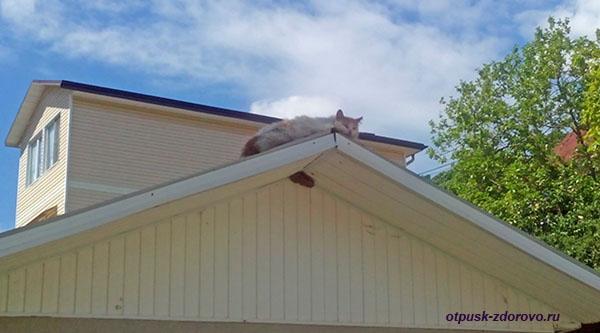 Кот греется на крыше