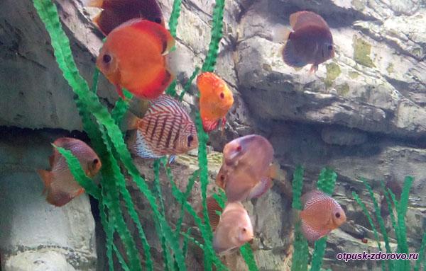 Разноцветные рыбки в аквариуме, Адлер