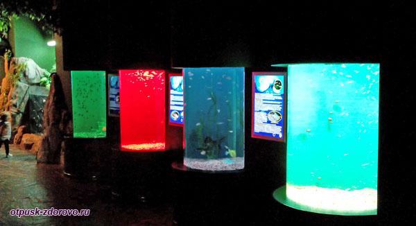 Разноцветные аквариумы в Океанариуме Адлера
