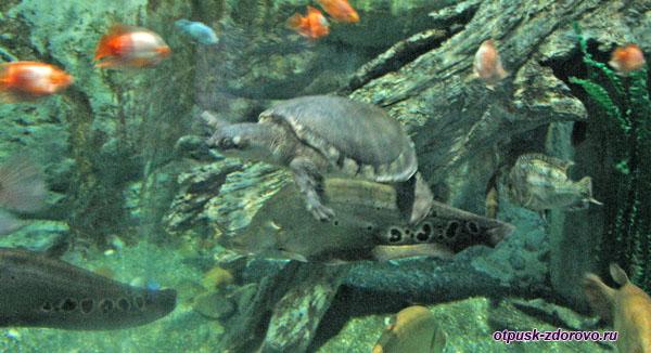 Черепаха плавает под водой