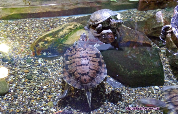 Черепаха греется на солнце на берегу