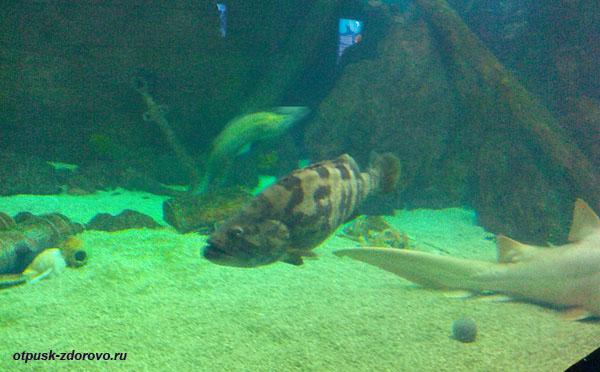 Глубоководные рыбы, Океанариум, Сочи