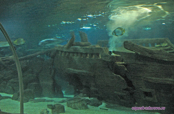 Затонувший корабль в аквариуме Адлера