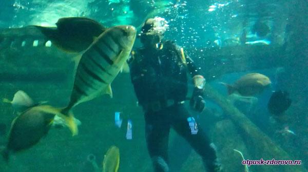 Аквалангист в окружении рыб