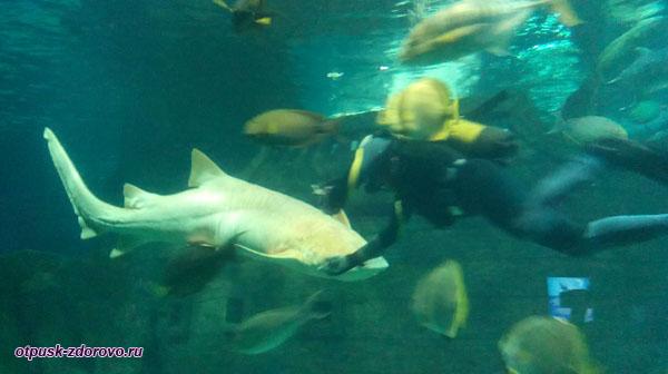 Аквалангист и белая акула