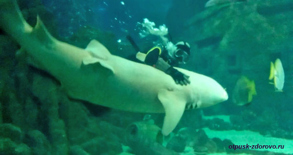 Аквалангист обнимает белую акулу