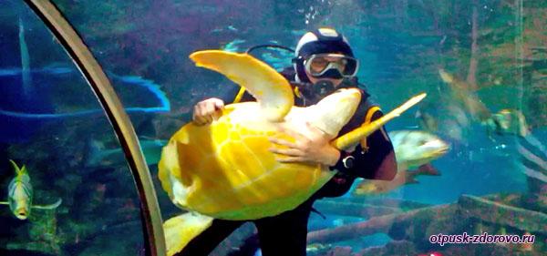 Аквалангист обнимает черепаху