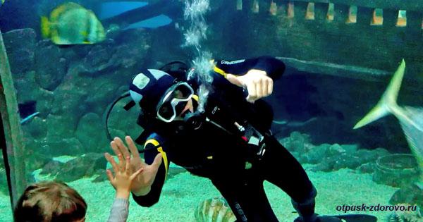Аквалангист приветствует зрителей, Шоу в Океанариуме Адлера