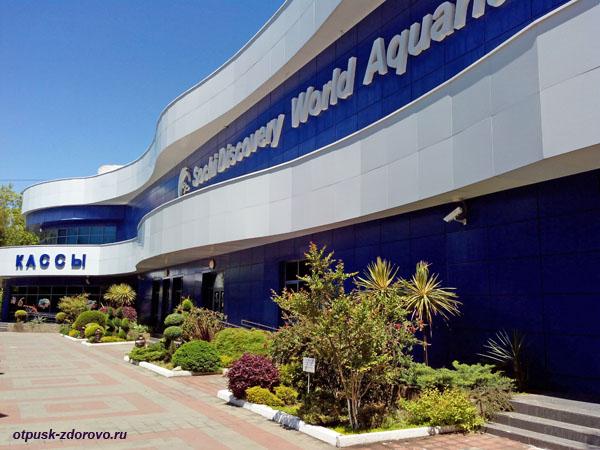 Океанариум (Адлер): самый большой Sochi Discovery World Aquarium
