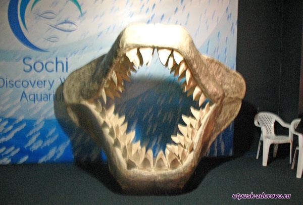 Челюсти акулы для фото