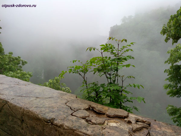 Каньон реки Хоста, Тисо-Самшитовая роща, Сочи
