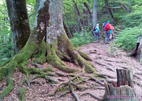 Объемные корни деревьев