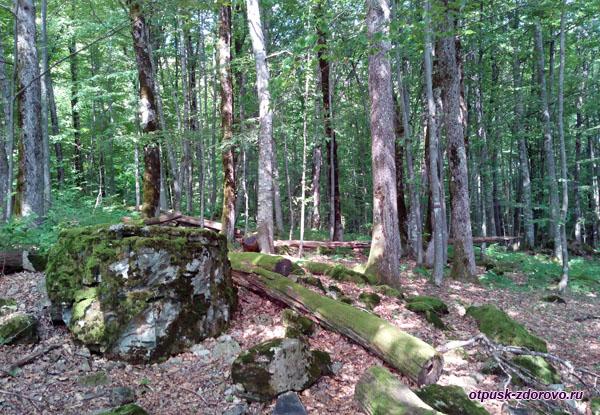 Камни, поросшие мхом, в заповедном лесу