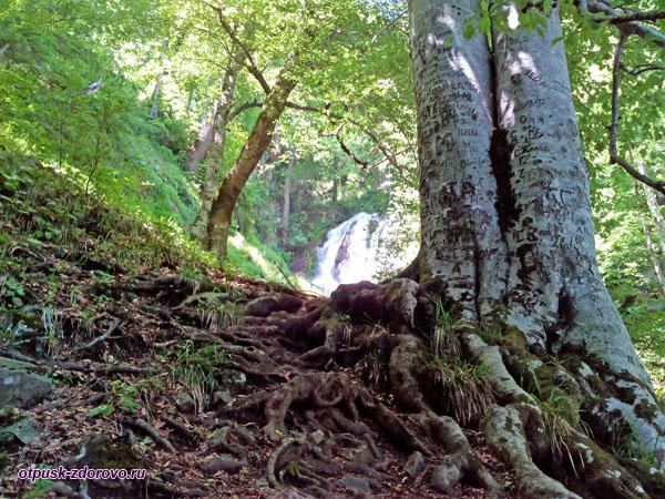 Корни деревьев у водопада Кейва