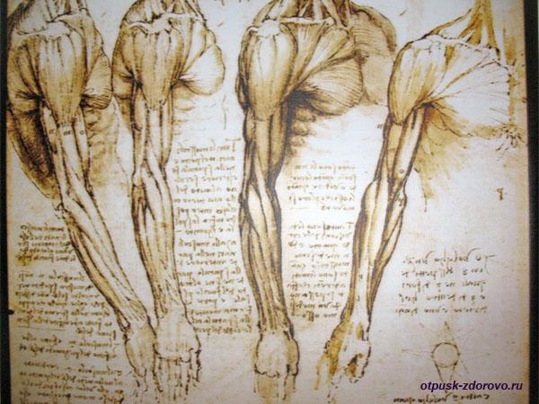 Медицинские картины Леонардо да Винчи