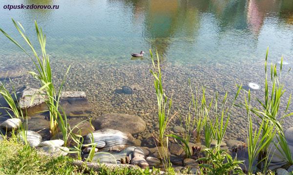 Пруд с утками в Сочи Парке