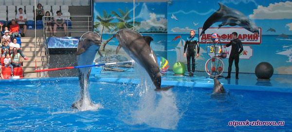 Шоу дельфинов в диснейленде Сочи