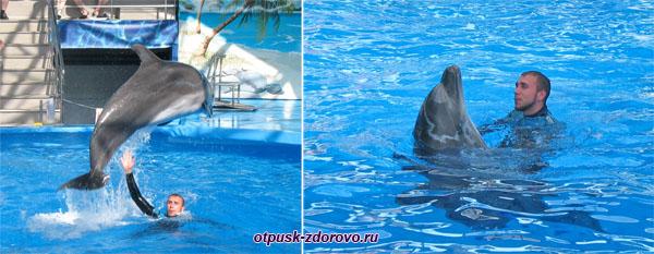 Выступают дельфин и человек